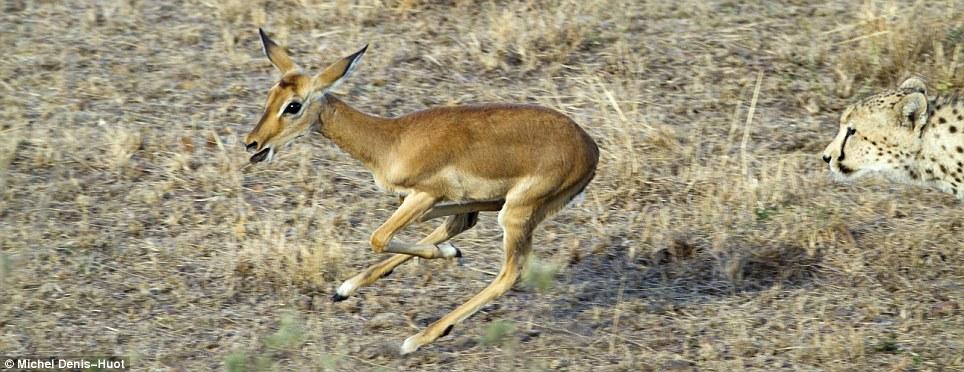 deer-1