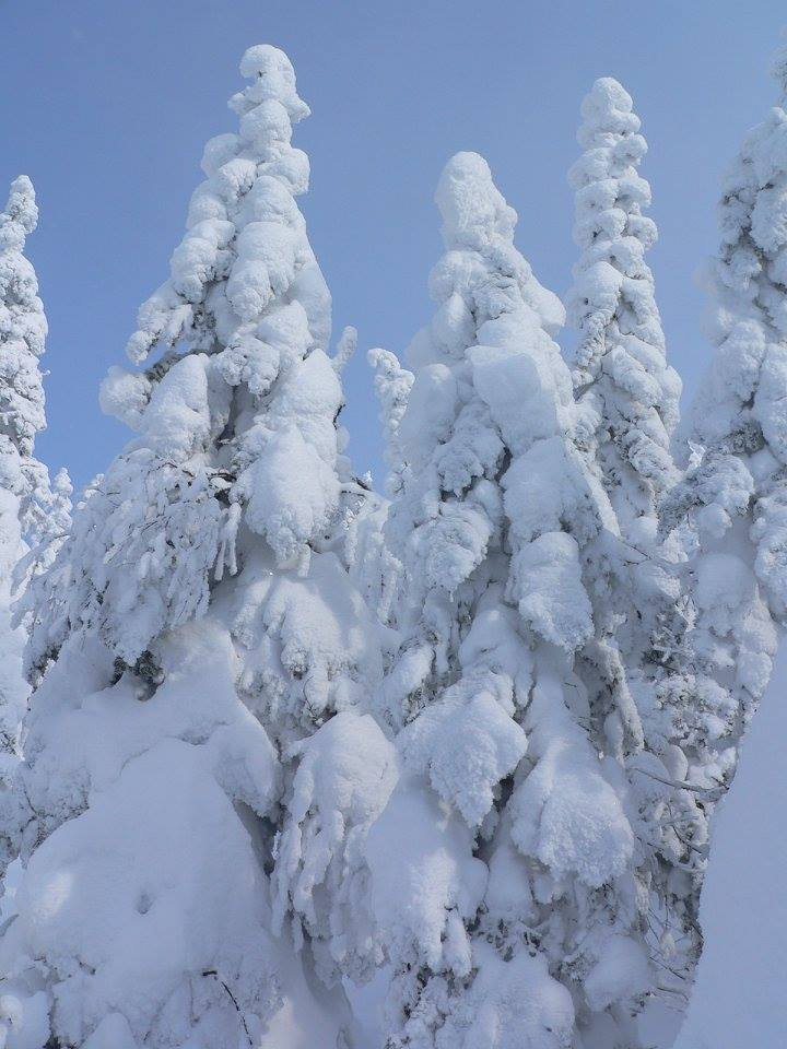 canada quebec-snow covers trees